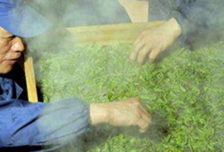 蒸青绿茶的简介